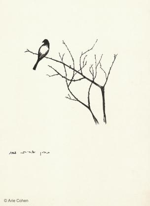 Bird • ציפור