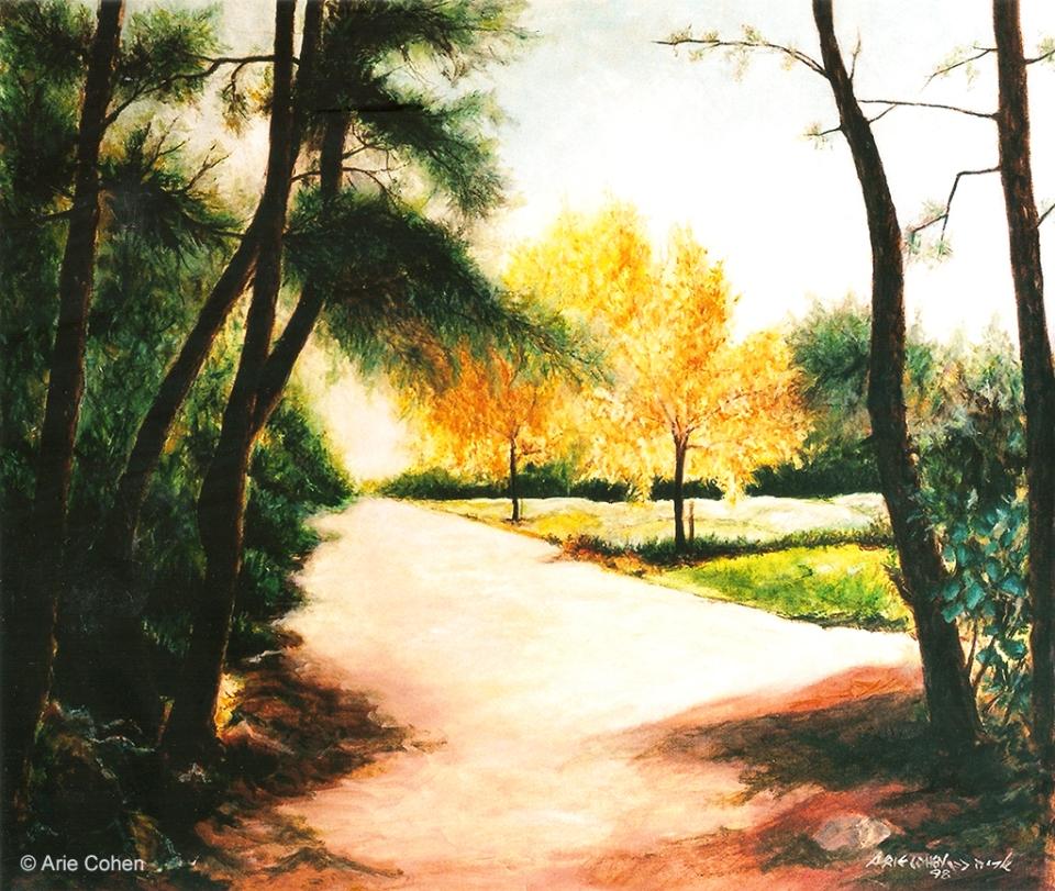 Zichron Yaakov View • נוף ביער זכרון יעקב
